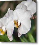 Beautiful White Orchids Flower Bloom Metal Print