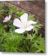 Beautiful Wild Geranium Metal Print