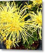 Beautiful Yellow Flower Metal Print
