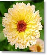 Beautiful Yellow Marigold Goldbloom Close Up  Metal Print