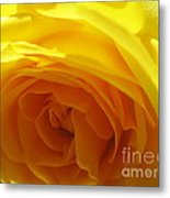 Yellow Rose Macro Metal Print