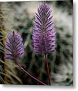 Beauty Among Thorns Metal Print