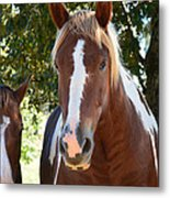Beauty And Her Best Friend Metal Print