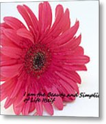 Beauty And Simplicity Metal Print