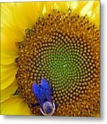 Beauty And The Bee Metal Print