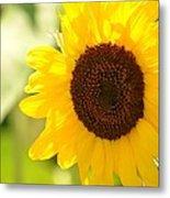 Beauty Beheld - Sunflower Metal Print