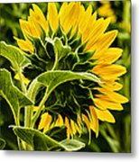 Beauty From The Back Metal Print