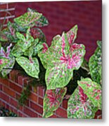 Beauty In Decorative Foliage Metal Print