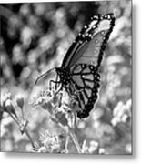 Butterfly Beauty In Nature Metal Print