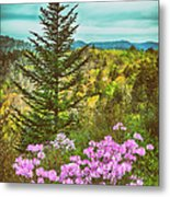 Beauty In The Forest II Metal Print