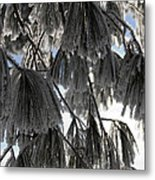 Beauty In The Shadow Of The Sun Metal Print