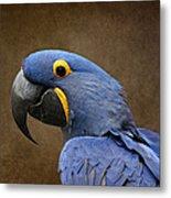 Beauty Is An Enchanted Soul - Hyacinth Macaw - Anodorhynchus Hyacinthinus Metal Print