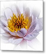 Beauty Lies Within Metal Print
