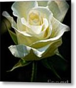 Beauty  Of A Rose Metal Print