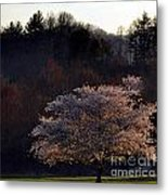 Beauty Of A Tree Metal Print