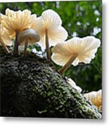 Beauty Of Mushrooms Argentina Metal Print