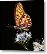 Beauty Of Nature Butterfly Brazil 2 Metal Print