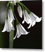 Beauty Of The Snowdrops Metal Print