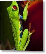 Beauty Of Tree Frogs Costa Rica 9 Metal Print