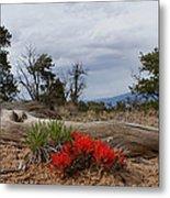 Beauty On 25 Mesa Panoramic Metal Print