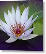 Beauty On The Water Metal Print