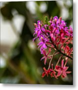 Beauty1 Metal Print