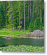 Beaver Dam In Heron Pond In Grand Teton National Park-wyoming Metal Print