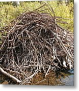 Beaver Lodge Metal Print