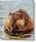 Beaver Portrait On Canvas Metal Print