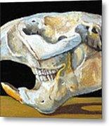 Beaver Skull 1 Metal Print