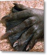 Beavers Hind Foot Metal Print