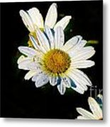Bed Of Daisy's For Daisy Metal Print