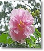 Bedazzled By The Light Louisiana Confederate Rose Metal Print