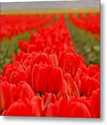 Beds Of Red Metal Print