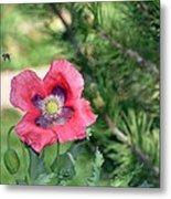 Bee A Flower Metal Print