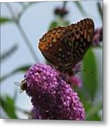 Bee And Butterfly Metal Print