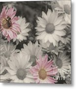 Bee And Daisies In Partial Color Metal Print
