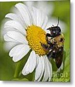 Bee And Daisy Metal Print