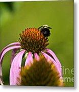 Bee And Echinacea Flower Metal Print