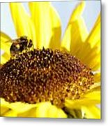 Bee And Flower Metal Print by Les Cunliffe