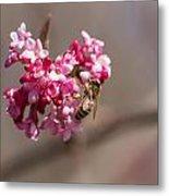 Bee And Flower Metal Print