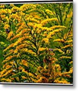Bee And Goldenrod Metal Print