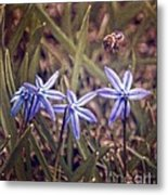 Bee And Squill Metal Print