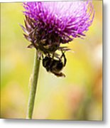 Bee And Thistle Metal Print