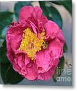 Bee And Wasp On Camellia Metal Print