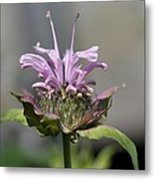 Bee Balm From The Panorama Mix Metal Print