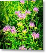 Bee Balm Of The Butterfly Gardens Of Wisconsin Metal Print