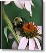 Bee Brunch I Metal Print