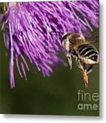 Bee Butt Metal Print