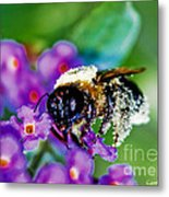 Super Bee Covered With Pollen Metal Print